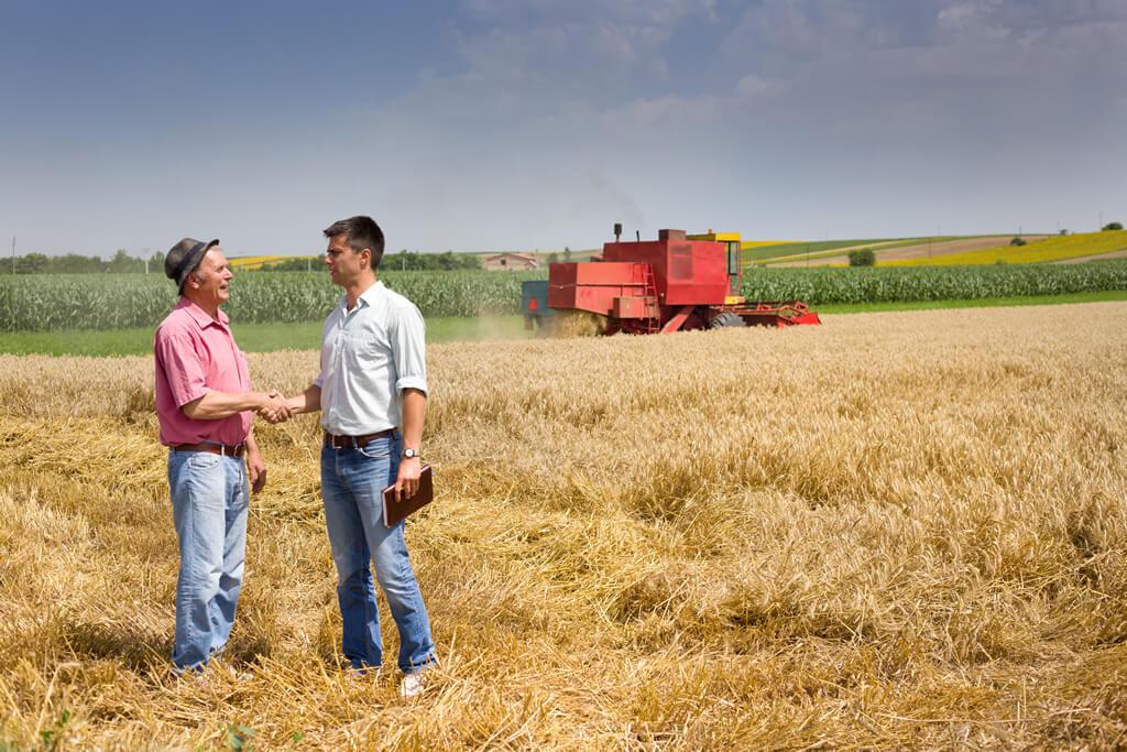 terrain-agricole